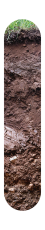 Soil profile vineyard FELDMARSCHALL